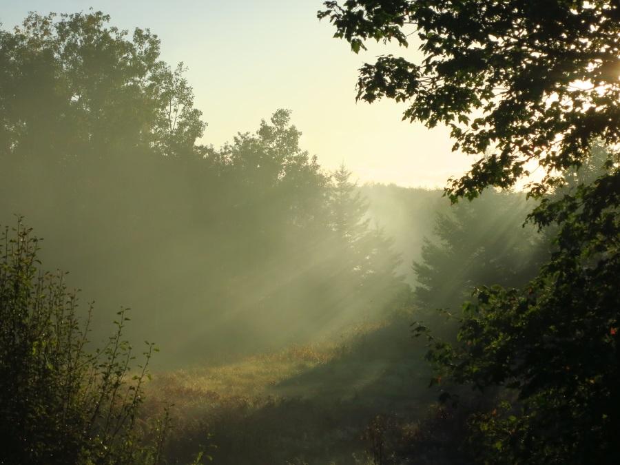 Fall Foggy Day