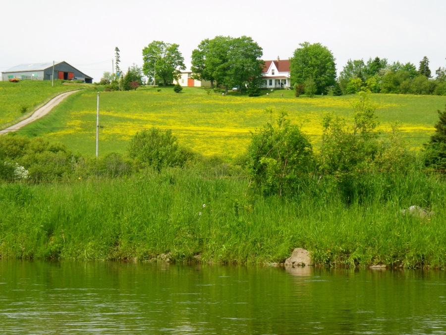 Spring MacKinnon Farm